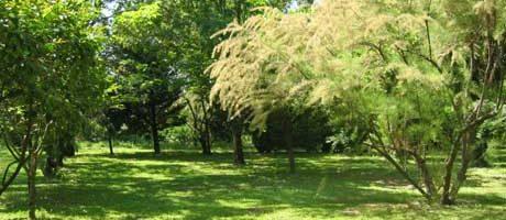 bienvenu dans un parc verdoyant
